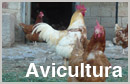 Association of Poultry Processors and Poultry Trade in the EU Countries (AVEC): 2015 Report