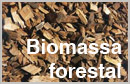Global bioeconomy in the conflict between biomass supply and demand